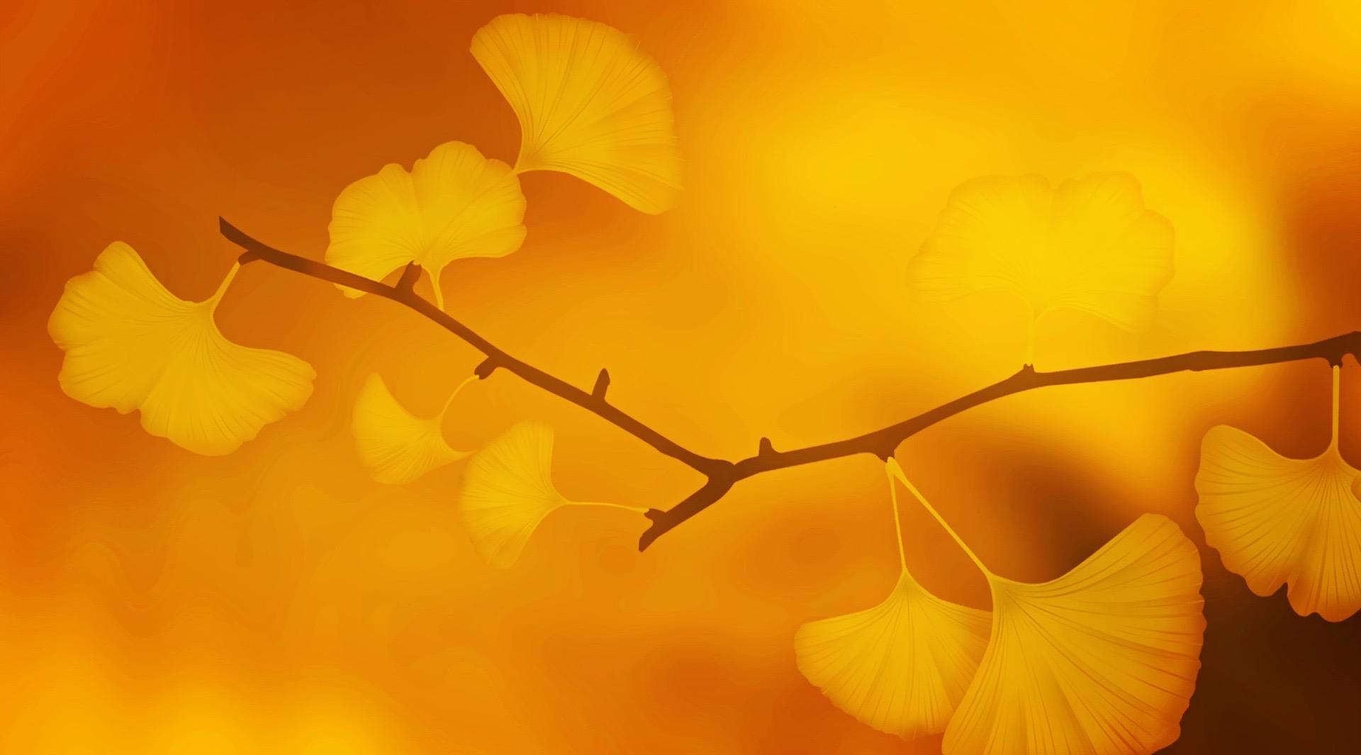 i protocolli della mindfulness
