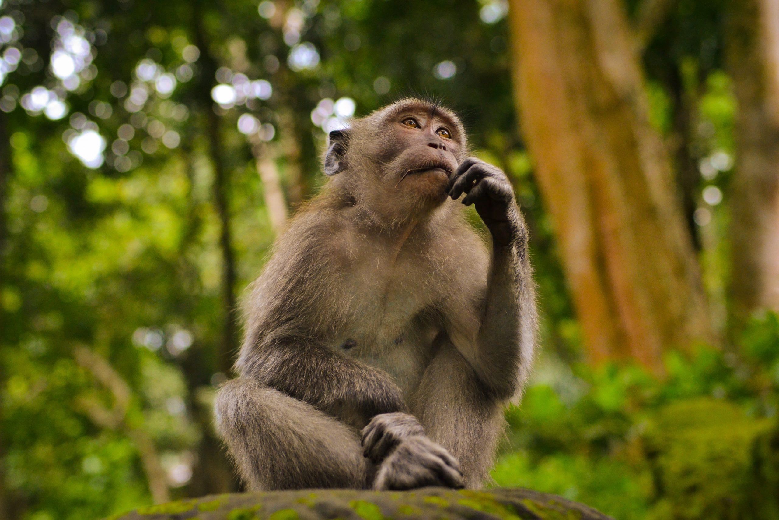 La mente scimmia